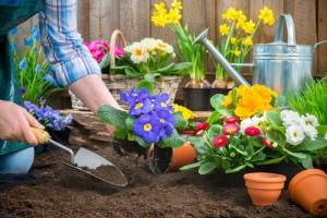 planting a garden near a fence