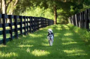 perimeter fence for your dog