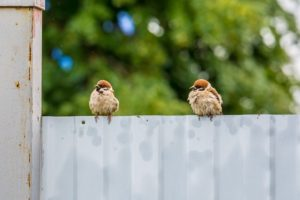 How Rain Can Impact Your Fencing, and How to Minimize Damage From Rain