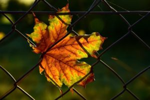 How a Fence and Gate Can be Damaged by Leaves